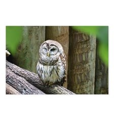 Cute Little Owl Postcards (Package of 8)