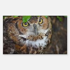 Owlish Owl Decal