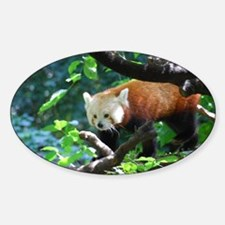 Red Panda Bear Decal