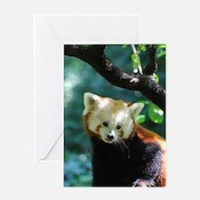 Sweet Red Panda Bear Greeting Card