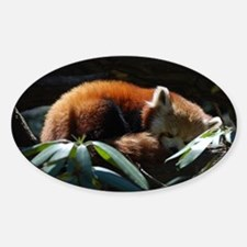 Sleeping Red Panda Decal