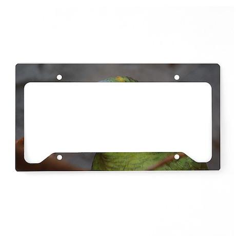 Amazon Parrot License Plate Holder