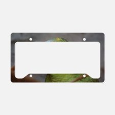 Amazon Parrot License Plate Holder