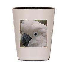 White Cockatoo Bird Shot Glass