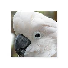 """White Cockatoo Bird Square Sticker 3"""" x 3"""""""