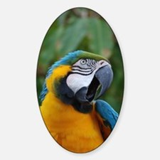 Squawking Blue and Gold Macaw Decal