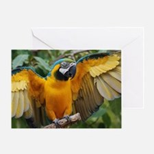 Macaw Wings Greeting Card