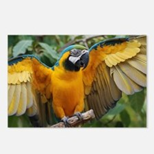 Macaw Wings Postcards (Package of 8)
