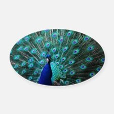 Peacock Oval Car Magnet