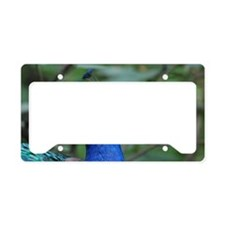 Blue Peacock License Plate Holder