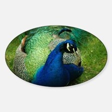 Peafowl Decal