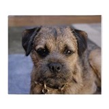 Border terriers Fleece Blankets