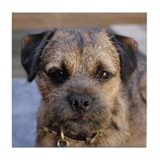 border terrier Tile Coaster