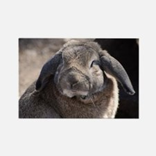 Lop Eared Rabbit Rectangle Magnet