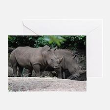 Pair of Rhinos Greeting Card