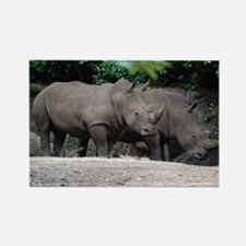 Pair of Rhinos Rectangle Magnet