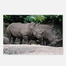Pair of Rhinos Postcards (Package of 8)