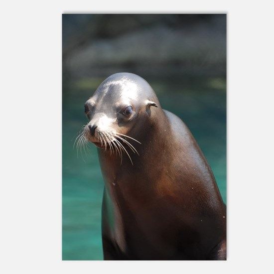 Adorable Sea Lion Postcards (Package of 8)