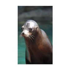 Adorable Sea Lion Decal