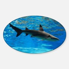 Black Tipped Shark Decal