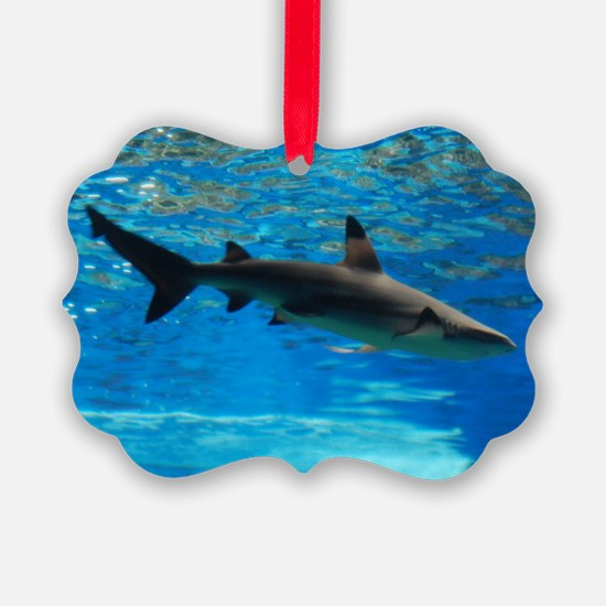 Black Tipped Shark Ornament