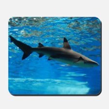 Black Tipped Shark Mousepad