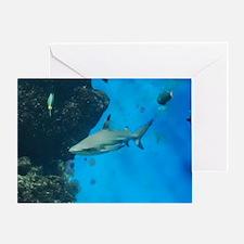 Swimming Black Tipped Shark Greeting Card