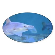 Bonnethead Shark Decal