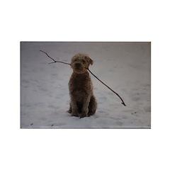 Wheaten Terrier Winter Fun Rectangle Magnet