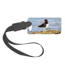 American Oyster Catcher Luggage Tag