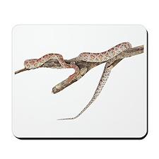 Corn Snake Photo Mousepad