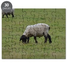 Grazing Black Faced Sheep Puzzle