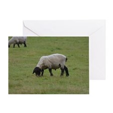 Grazing Black Faced Sheep Greeting Card
