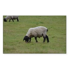 Grazing Black Faced Sheep Decal