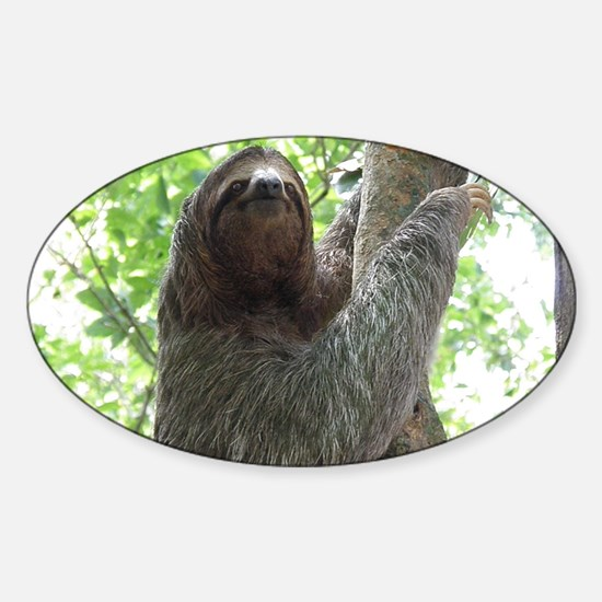 Sloth in a Tree Sticker (Oval)