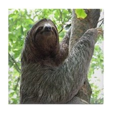 Sloth in a Tree Tile Coaster