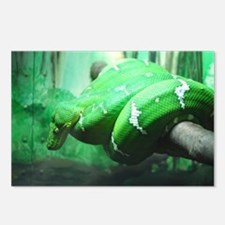 Emerald Tree Boa Postcards (Package of 8)