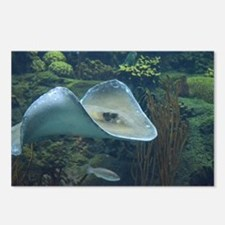 Stingray Flying Through t Postcards (Package of 8)