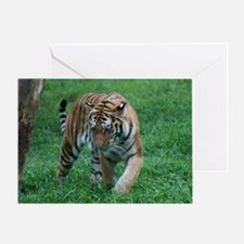 Tiger on the Prowl Greeting Card