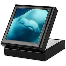Cute Beluga Whale Keepsake Box
