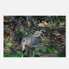 Wilderness Wolf Postcards (Package of 8)