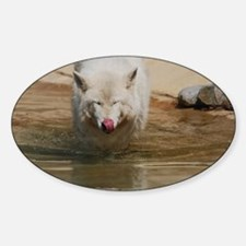 White Wolf Licking His Nose Sticker (Oval)