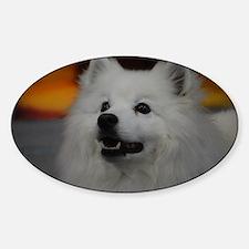 American Eskimo Dog Sticker (Oval)