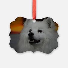 American Eskimo Dog Ornament