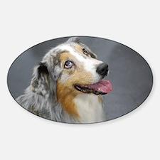 Cute Aussie Sticker (Oval)