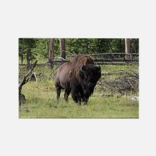 Bison of Yellowstone Photo Rectangle Magnet