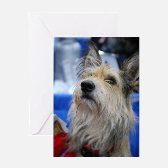 Berger Picard Dog Greeting Card