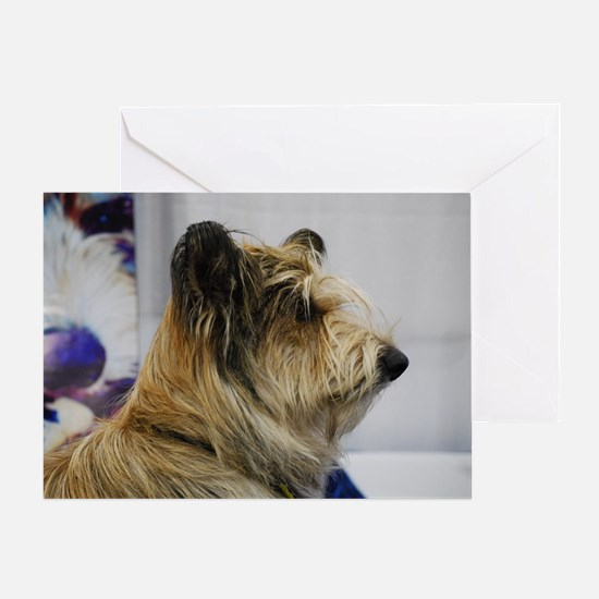 Shaggy Berger Picard Dog Greeting Card