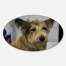 Cute Berger Picard Dog Sticker (Oval)