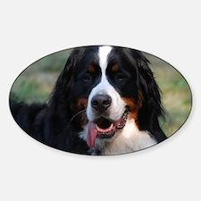 Adorable Bernese Mountain Dog Sticker (Oval)